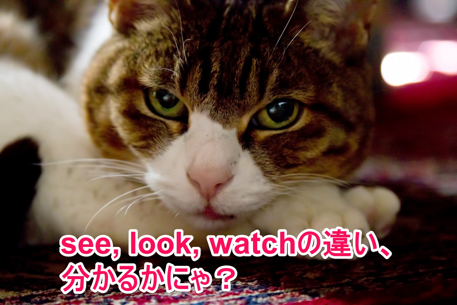 See Look Watchの違い ノ チンの 自由ラブ ライフ