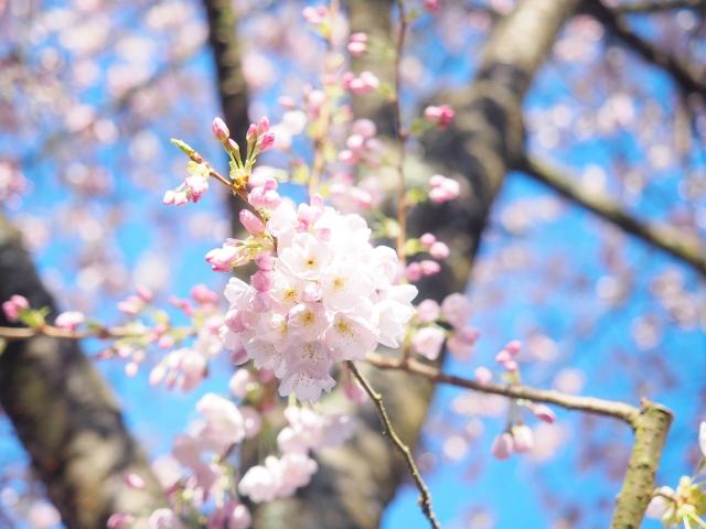 春分の日:海外ではどうなの?え...