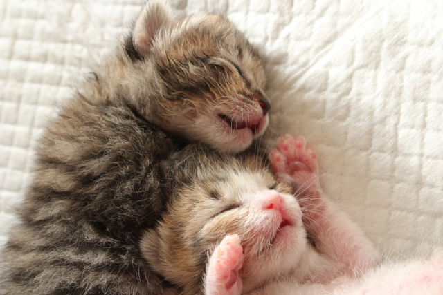 眠る子猫たち
