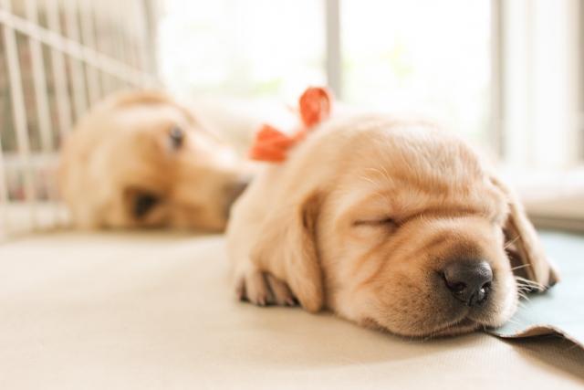 眠るワンコ