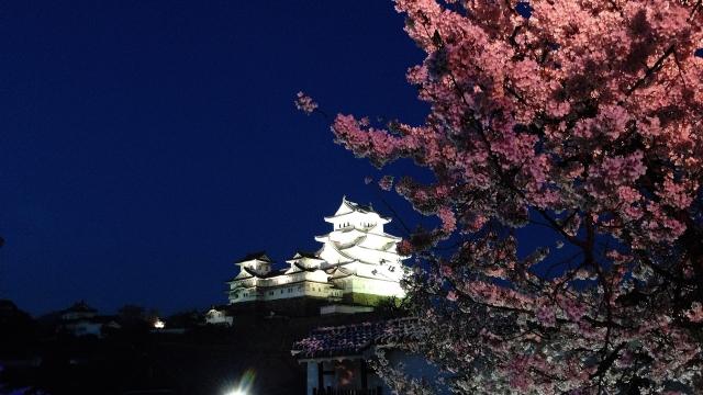 お城と夜桜