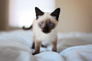 ベッドの上の子猫